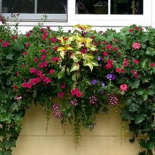 17 Best Images About Window Boxes On Pinterest Gardens