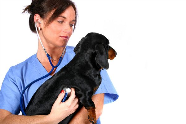 Where To Get Cheap Rabies Shots For Dogs