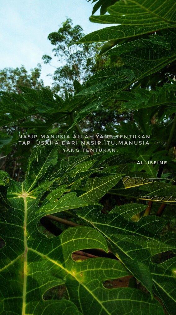 Quotes alam Alam
