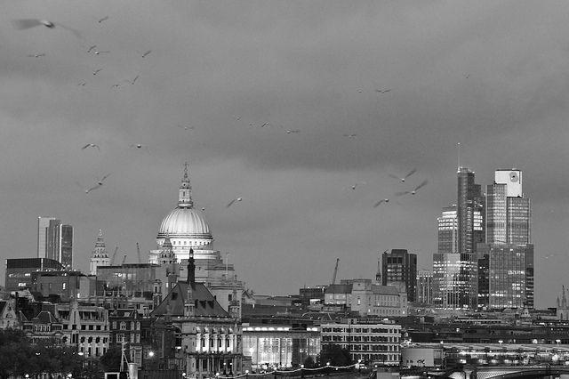 St Paul's and Gulls.