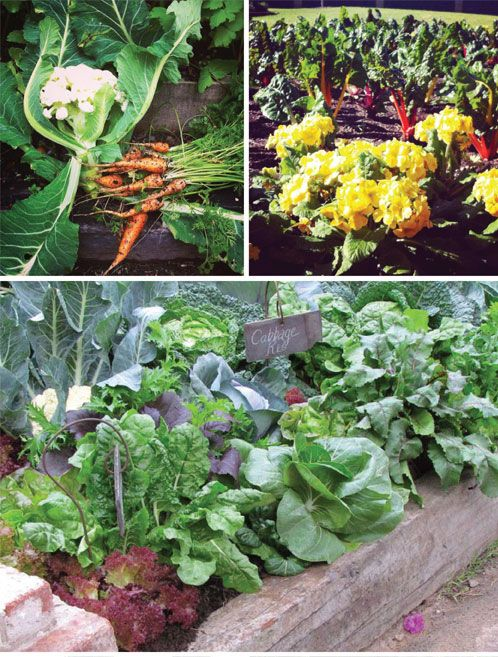 Summer Garden Snaps! | Tui Garden