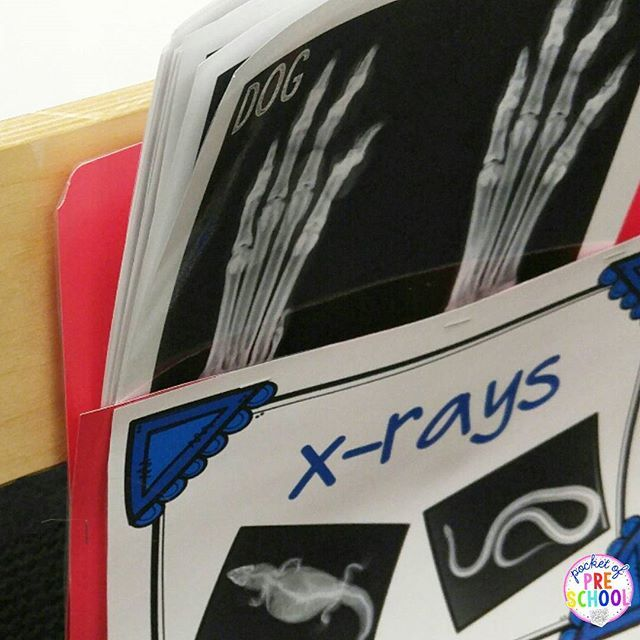 Real x-rays for the dramatic play Vet are a game changer! Students pretended to be the vet, took x-rays, and examined them. You could hear my preschool & pre-k students using new vocabulary, talking about bones, and comparing them to their body.