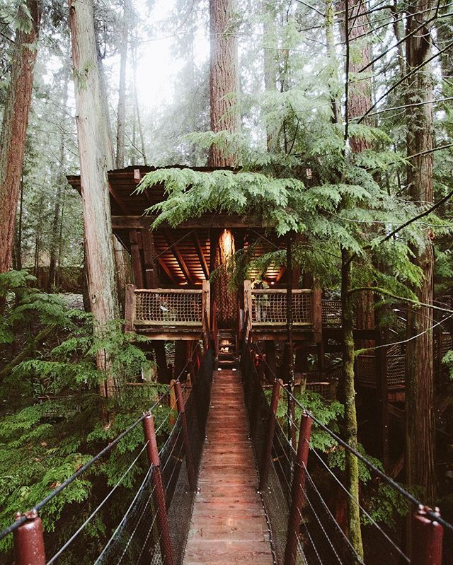 Tree Houses | A wood plank bridge to house in the trees