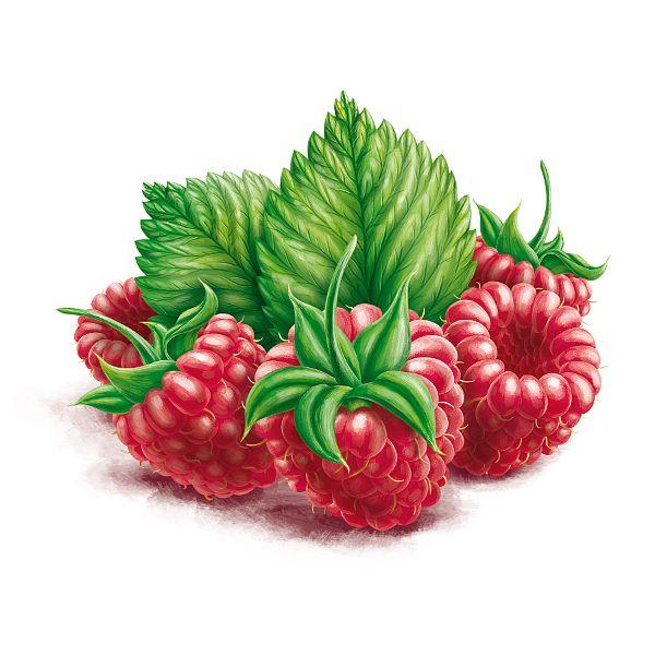 Berries by Roman Belichenko