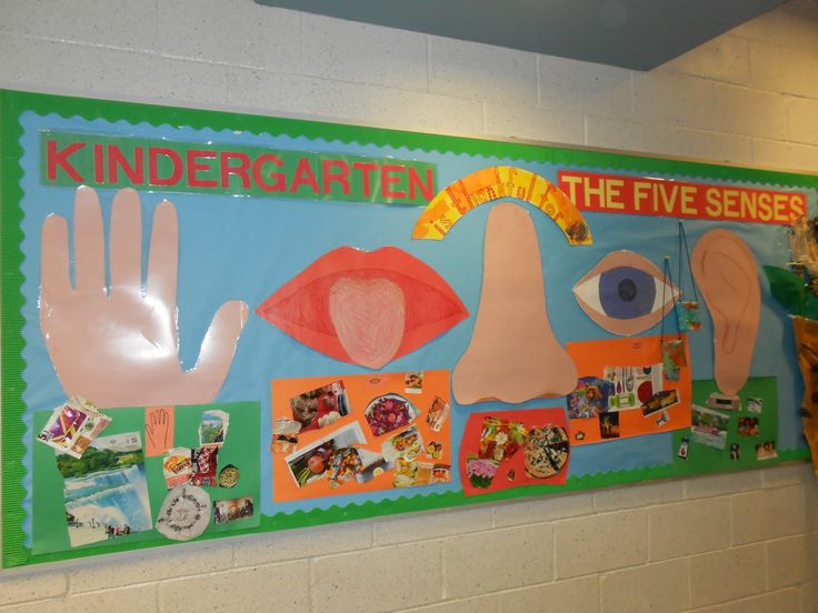Kindergarten and The 5 Senses - Bulletin Board