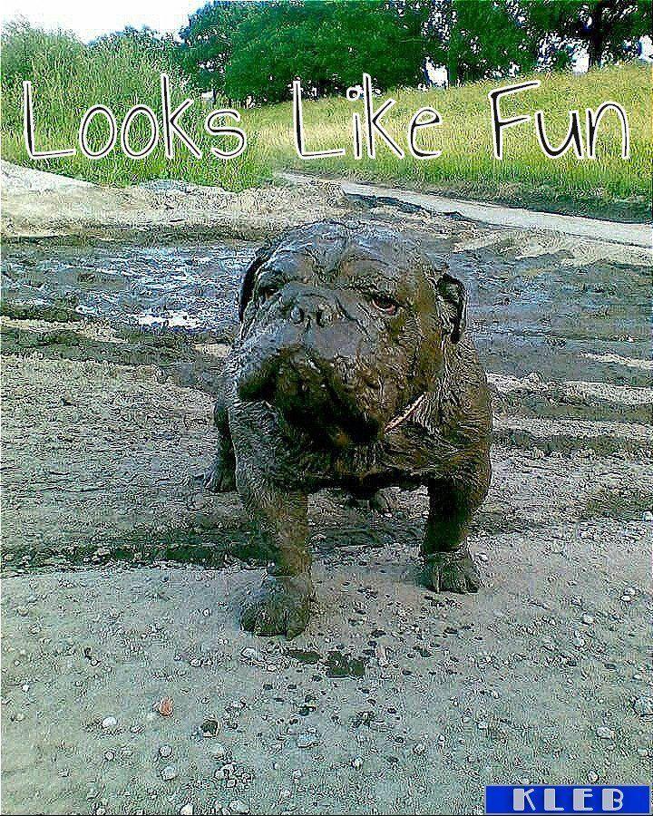 #allenglishbulldogs #theenglishbulldogs #pinterest #family #englishbulldogs #englishbulldogsofig https://t.co/yNdf4nkbeP