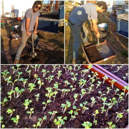 What grows in soil blocks