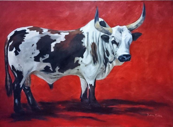 Nguni bull - Flippie Botha