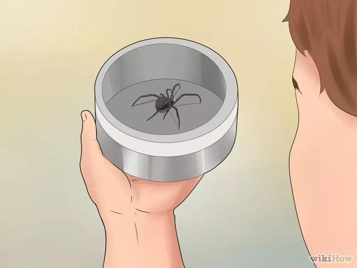 Imagen titulada Treat Spider Bites Step 1
