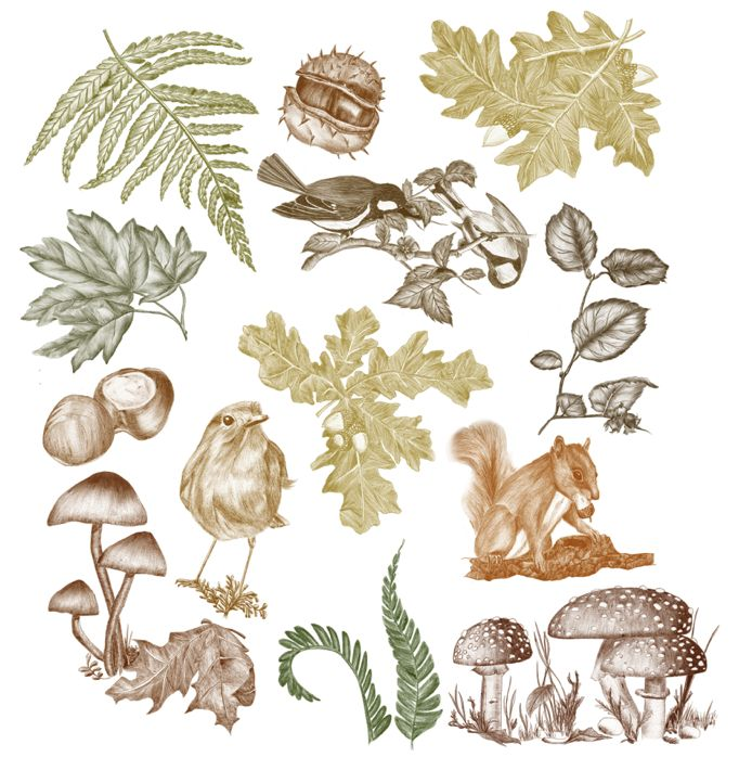 squirrel, branches, leaves, autumn, birds, mushroom, oak, chestnut #ElementEdenArtSearch