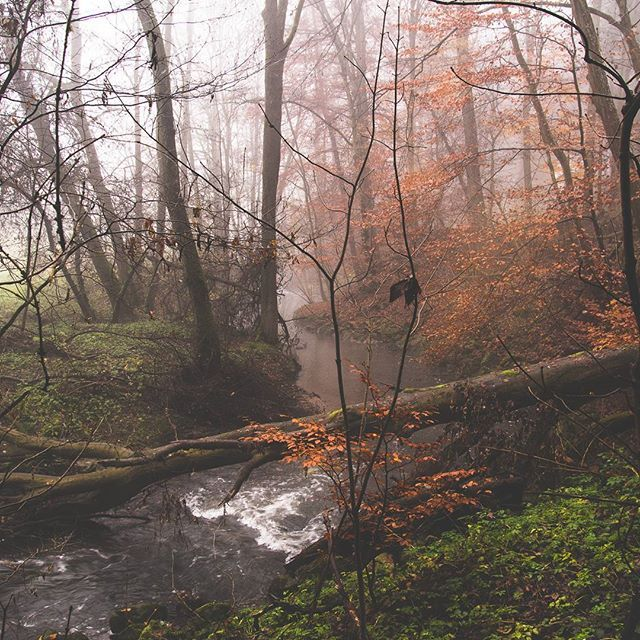 Last leaves  #forest #wald #river #fluss #wasser #natur #nature #landschaftfotografie #deutschland #stuttgart  #riverside #waterfoam #nature #naturfotos #langzeitbelichtung #longexposure #photooftheday #natureoftoday