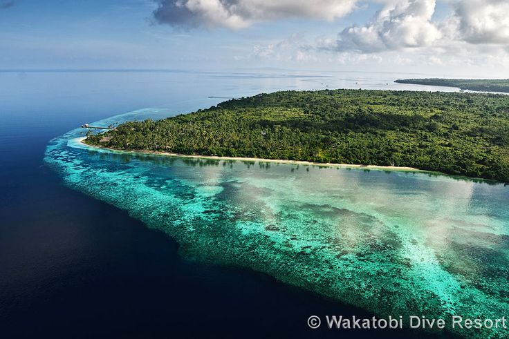 Wakatobi, Indonesia (off Sulawesi). It is easily the best reef & muck diving I've done - but it's the far side of the world.