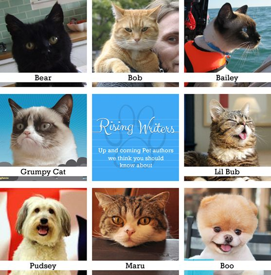 Rising Pet Writers comes to hive! Animals who write books! It happens! Featuring The Bear (My Sad Cat), Street Cat Bob, Bailey Boat Cat, Grumpy Cat, Lil' BUB, Pudsey Dog, Maru cat and Boo.