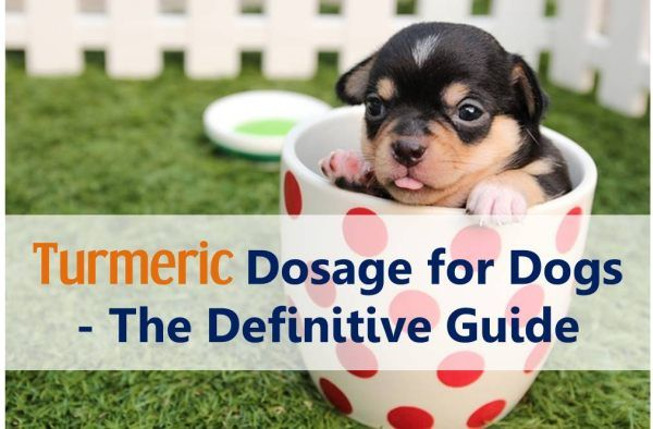 Turmeric is great for dogs but how much turmeric should you give and how ?