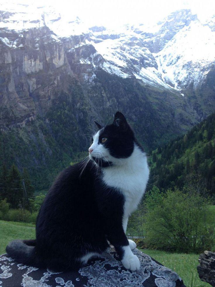 Este gato resgatou um jovem perdido nos Alpes suíços.