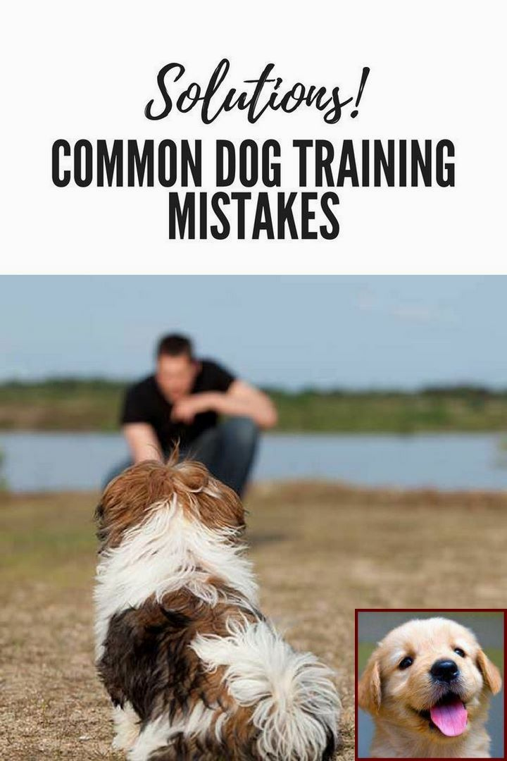 House Training A Puppy At Night And Dog Training Classes Portland