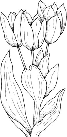 Best 25+ Flower coloring pages ideas on Pinterest | Mandala ...