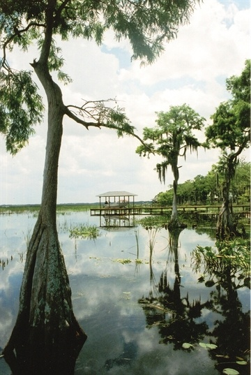 17 best images about places to go in sebring on pinterest for Lake istokpoga fishing
