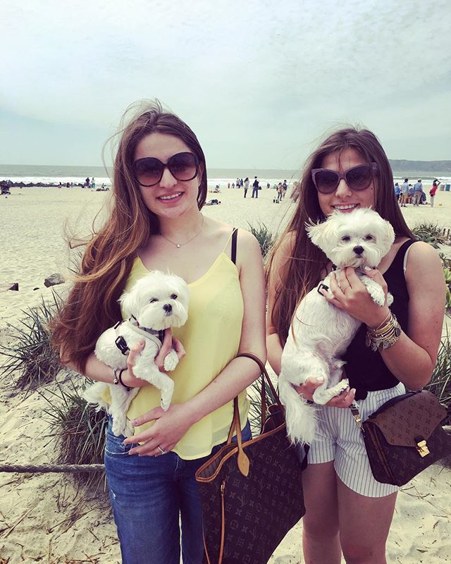Mommy has the bestest friends ever! Happy birthday Aunty Jasmine thanks for inviting puppies to your brunch 💙💙💙 #beach #brunch #bradnchan #lajolla #maltese #model #malteseofinstagram #maltesepuppy  #dogs_of_instagram #dogsofinstagram #dogoftheday #barkbox #barkpost #huffpostgram #puppy #instapets #instadogs #instadog #petsofinstagram #petstagram #poshpamperedpets #ilovemydog #dogstagram #picoftheday #weeklyfluff #pet #dog #dogdaysofinstagram #malteselovers #maltese101 #lajollalocals…