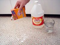 Best 20 Cleaning Pet Urine Ideas On Pinterest Dog Urine
