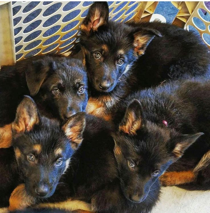GSD   I would take them ALL!! /ss