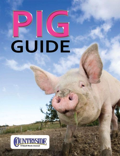Raising Pigs for Meat: Everything You Need to Know About Pig