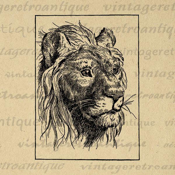 Digital Graphic Antique Lion Printable Cat Image Download Jpg Png Eps  HQ 300dpi No.445 @ vintageretroantique.com #DigitalArt #Printable #Art #VintageRetroAntique #Digital #Clipart #Download #Vintage #Antique #Image #Illustration