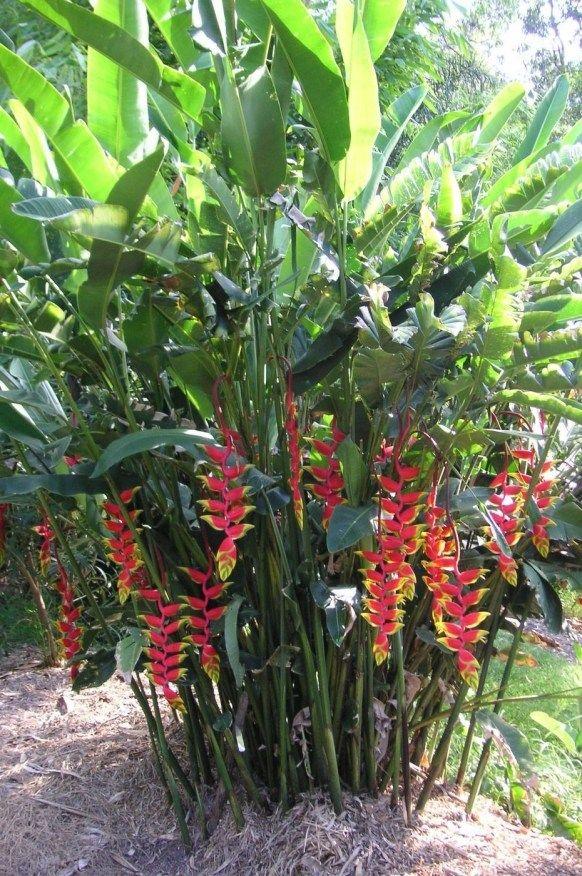 39 idéias de plantações tropicais que você pode experimentar em seu jardim  – Gardening