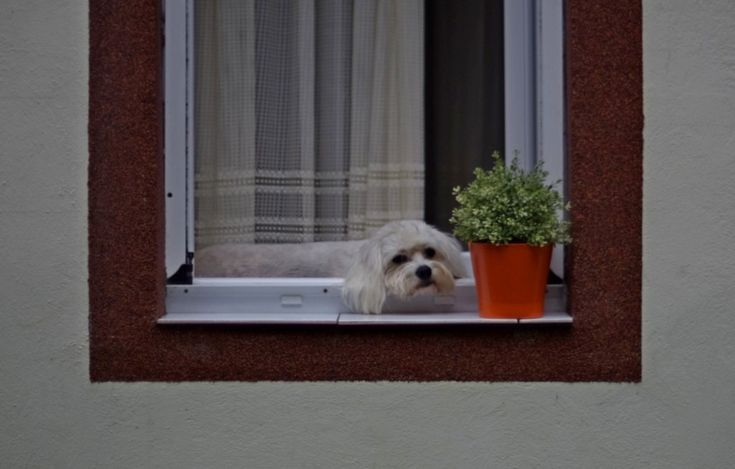 (1) How much is that doggie in the window? - PentaxForums.com
