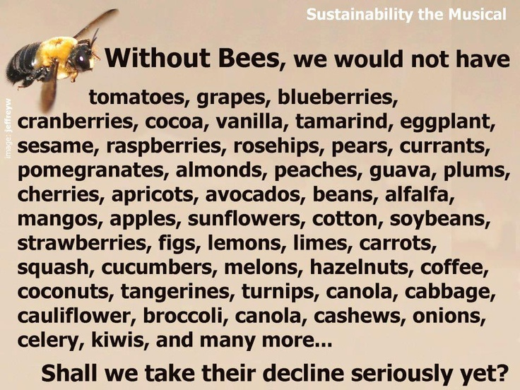 Monsanto pesticides killing bees...note that it lists cocoa.  CHOCOLATE is endangered! NOW will you pay attention!?!