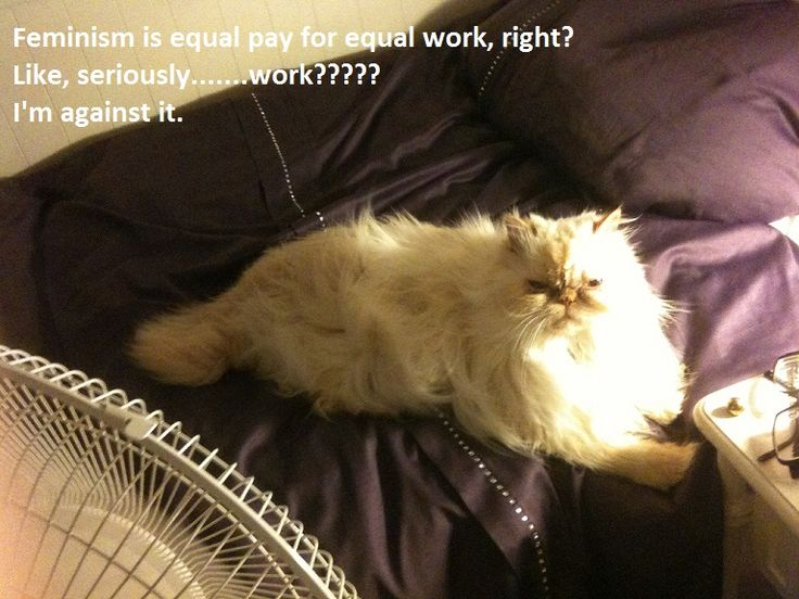 This cat has a point.