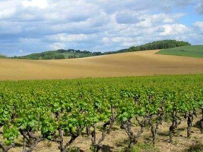 Vignobles de Gaillac, Tarn, Midi-Pyrénées - le vignoble de Gaillac près de Brin de Cocagne - chambre d'hôtes écologique de charme dans le Tarn près d'Albi - Brin de Cocagne