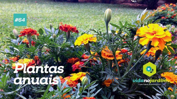 Conheça mais sobre as plantas anuais #64