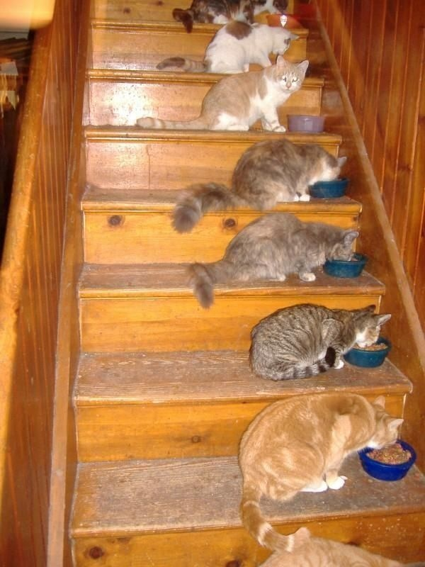 : Picture, Crazy Cats, Animals, Meow, Pets, Dinner Time, Staircase, Funny