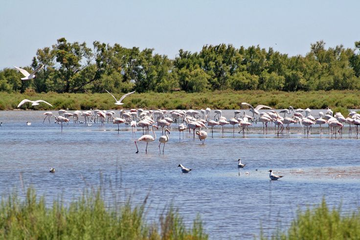Explore the magnificent and unique Camargue coastal scenery and maybe get the chance to contemplate flamingos and wild horses famous in this region.