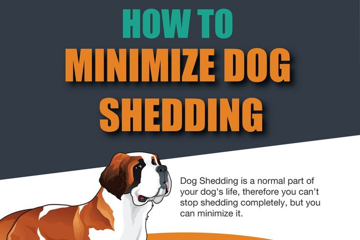 Dog shedding is such a pain in the ass! Luckily for you, there are solutions and products to deal with the dog shedding problems. Infographic.