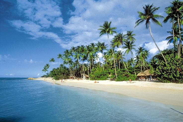 BarbadosBeach Beach Beach, Travel Dreams, Dreams Vacations, Breezy, Favorite Trips, Holiday Destinations, Beautiful Places, Amazing Places, Travel Fantasy