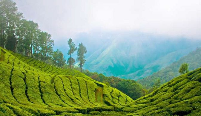 These alluring tea-gardens!