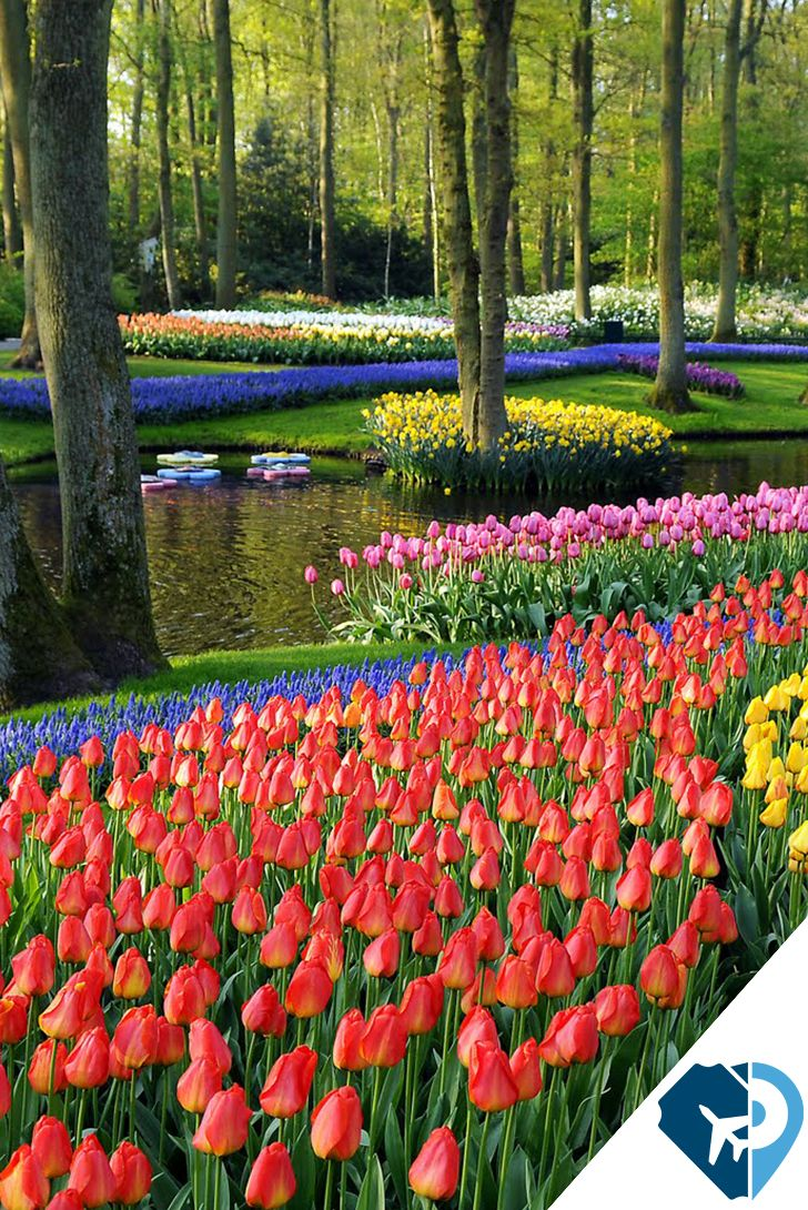 1000 ideas sobre jard n de tulipanes en pinterest flores de jard n arbustos de lilas y - Jardines de tulipanes en holanda ...