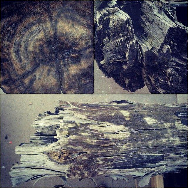 Ny betydning av gammelt treverk........vi har nå to #eikestokker #karbondatert til 6490 år gamle (altså 2000 år eldre en Kheopspyramiden) Noen som ønsker seg et #spisebord fra #steinalderen ? #håndlagetavoss #barefordeg #galskap #prosjekt  Bare hos www.drivved.no