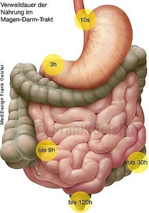Anatomie Physiologie Gastrointestinaltrakt, Magen-Darm-Trakt mit ...