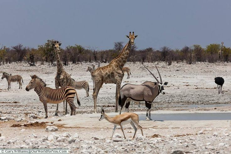 Places of interest to visit in Namibia. Western Etosha National Park - there are very few places left that can be called unspoiled wilderness areas, with a few exceptions, and the western part of Etosha is one such place........#wildlife #namibia #photosafari #tourism #extremefrontiers #bush #adventure #holiday #vacation #safari #tourist #travel
