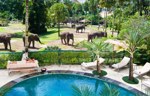Elephant Safari Park Lodge Bali. Perfect place for a couple, family that seeking a unique getaway in the most spectacular botanical gardens and acclaimed as the world's best Elephant park. Elephant Safari Lodge surrounded by national forest. The Elephant Safari Park Lodge is located just 20 minutes north from the islands cultural and artistic centre of Ubud and 75 minutes north of Ngurah Rai Airport in the historic village of Taro. http://www.zocko.com/z/JJYLo