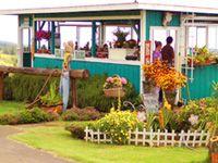 Maui Island Tour Taste of Maui Excursions