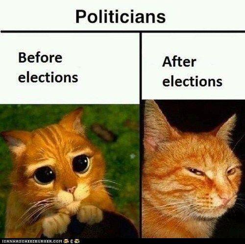So true.Politicians, Politics, Cat, Laugh, Truths, Funny Stuff, So True, Humor, True Stories
