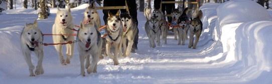 SNP multi-activity winterreizen  Onze multi-activity winterreizen bieden voor elk wat wils. Gedurende uw sneeuwvakantie kunt u kennismaken met onder andere sneeuwwandelen, langlaufen, ijsvissen en zelfs het maken van een hondensledetocht behoort op diverse bestemmingen tot de mogelijkheden.
