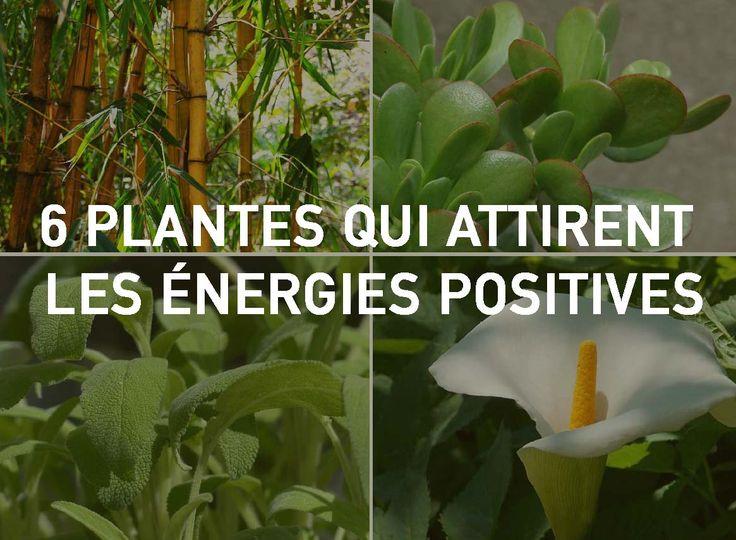 6 plantes qui attirent les nergies positives selon le feng shui soins pinterest. Black Bedroom Furniture Sets. Home Design Ideas