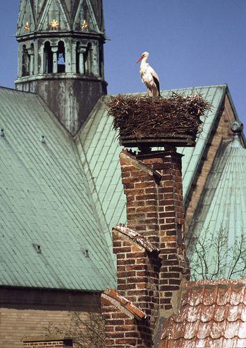 Ribe, Denmark & the Stork Nests [Domkirke behind] [http://www.ribe-domkirke.dk/]