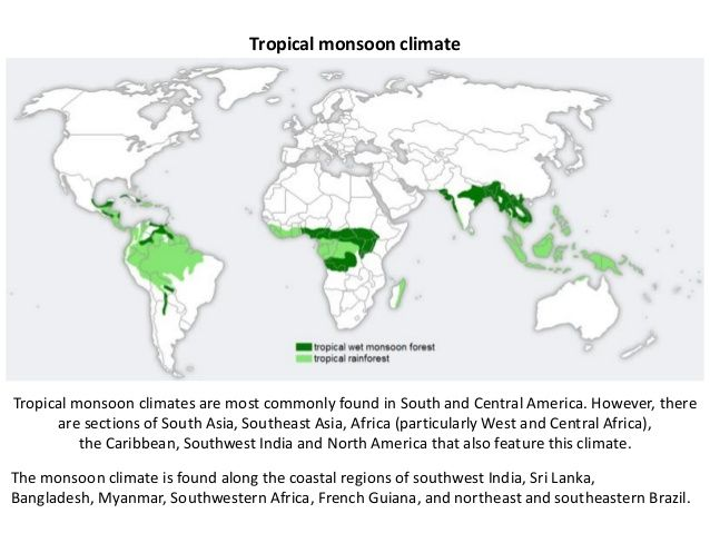 Map Of The Amazon Rainforest Amazon Rainforest Map Rainforest