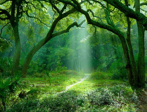Misty Green Forest Nature River Beautiful 1ziw: Green And Beautiful. From Http://aembooks.blogspot.com